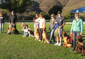 Intermediate Obedience Lessons