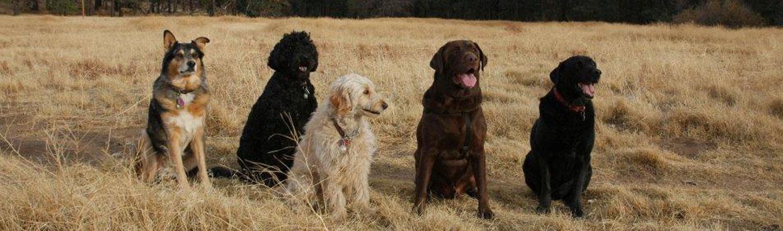 dog_trainer_shannon_2